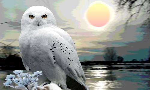 SchneeEule2BewUnschgrobeMalerei Kopie Digitale Malerei   Neue Schau ab 6. März im NaturparkHaus der Dübener Heide