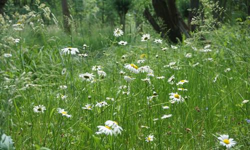Sommerwiese Foto VDH 500 Aktionen im Naturpark Dübener Heide zum 1. Tag der Jungen Naturwächter
