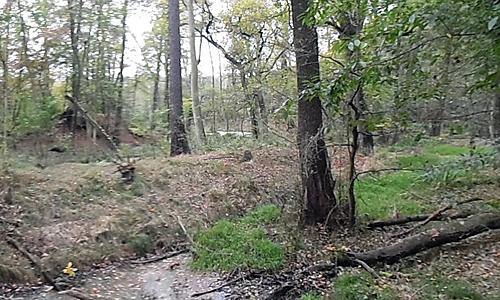 Wald Wildtiersonntag führt an geheimnisvollen Ort