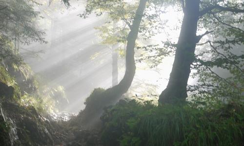 Wald2 Abendstimmung am September Wildtiersonntag im Naturpark Dübener Heide