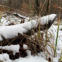 Waldbaden im Winter (C) Nico Fliegner