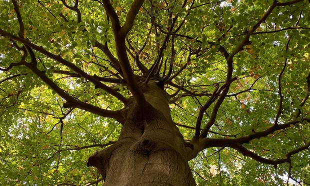 Waldbaden Nico Fliegner 500 300 620x372 Es riecht nach Ostsee im Heidewald – Waldbaden am 25. August