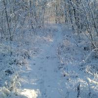 Wildtiersonntag im Februar (C) Birgit Rabe