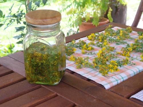 Workshop Entspannende Heilpflanzen Foto Paula Passin Workshop im NaturparkHaus: Heilpflanzen für Entspannung und guten Schlaf
