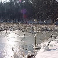 Blick auf den Zadlitzbruch im Winter (C) Naturpark Dübener Heide
