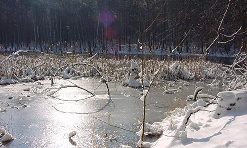 Zadlitzbruch im Winter Foto Naturpark Dübener Heide 500 300 Mit dem Heidemönch auf Wanderschaft im geheimnisvollen Moor