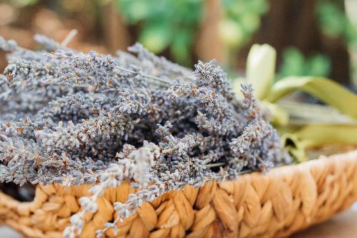 jessica ruscello unsplash 500 300 Workshop Heilpflanzen gegen den Winterblues im NaturparkHaus
