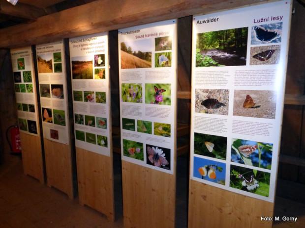 1 Schmetterlingsausstellung eröffnung Grassemann 14 9 14 Go 2 620x465 Bis zum April 2015: Aussstellung Schmetterlinge im Fichtelgebirge