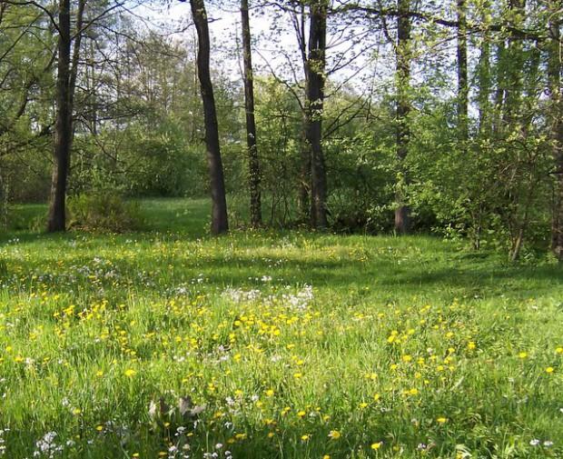 1 Wiesenschaumkraut Aue21 620x505 So, 12.06., 14 17 Uhr: Wer lebt hier? – Vielfalt der Wälder