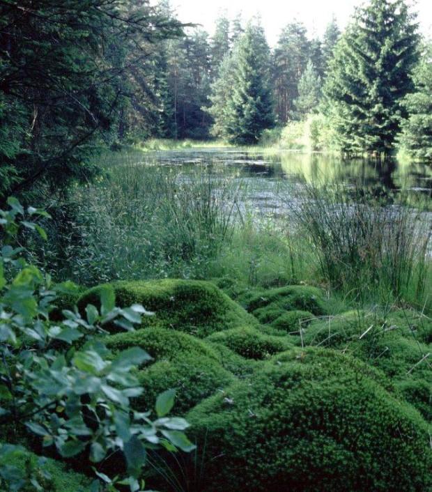34 Meier Im Zeidelmoos 620x706 Entdeckungen im Moor – Moorführung