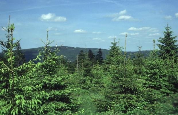 6 Meier Blick vom Ochsenkopf zum Schneeberg 620x403 Fichtenspitzen und Maiwuchs: Wie schmeckt der Wald?