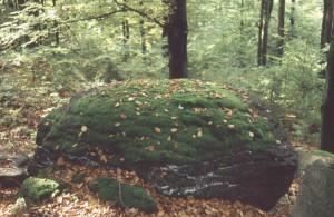 98 Meier Fichtelgebirgsromantik (auf dem Hengstberg)