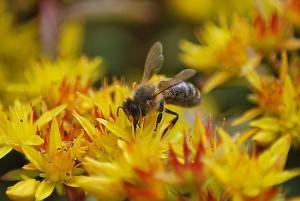 Blüten Insekten LRA Fotoarchiv 2009 (547)