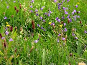 Blütenreiche Wiese Fichtelgebirge Schneider 2003