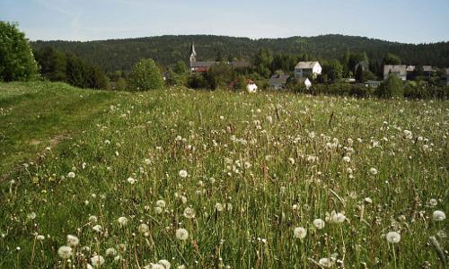 Copyright VDN Georg Schwaiger Beitrag 03.07.2015: Wildkräuterwanderung mit Brotzeit