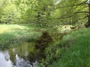 Egertal_Mühlgraben_Grafenmühle_2013-05-28_Go (1)