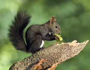 Eichhörnchen Bildachiv BN KG Wunsiedel