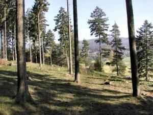 Haidberg-lichterWald-Magerrasen