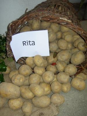 Kartoffelausstellung Großschloppen 2007 (5)