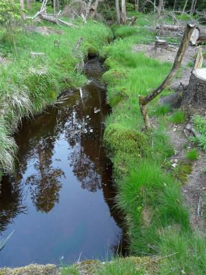 Moor Graben LRA Fotoarchiv 2009 (121)