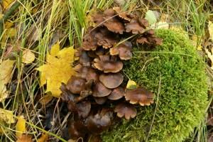 Pilze Herbst Röslau froheu 10-13