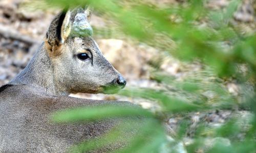 RehbockNL Neuer Wildpark am Waldhaus Mehlmeisel öffnet seine Pforten