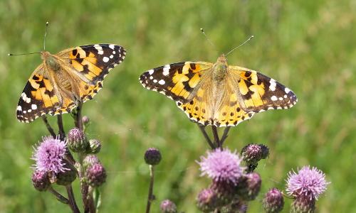 Schmetterling beitrag Orchideen und Schmetterlinge