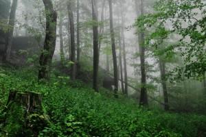 Wald Wölfel