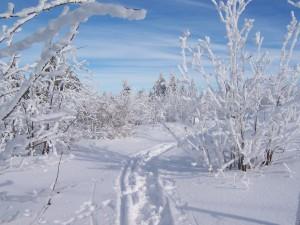 Winter im Fichtelgebirge Krauss 2005 (2)