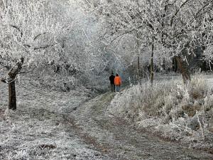 Winter wanderweg  rauhreif skal