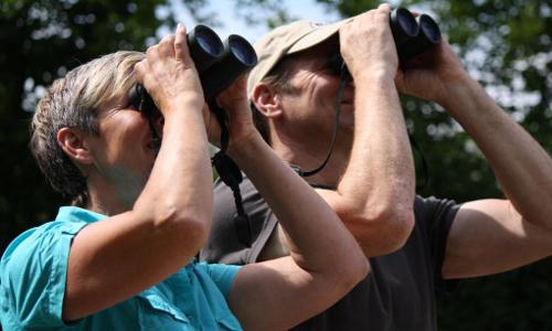 vogle beitrag Vogel Exkursion am See