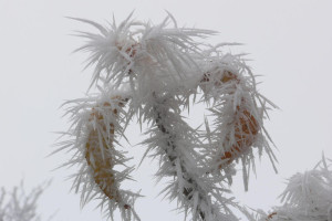 winter  Rauhreif ckr skal