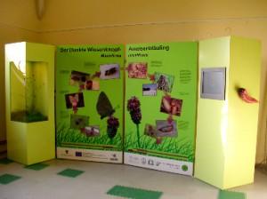 Ausstellung Ameisenbläuling-2017-Krummhaar