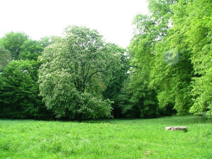 Naturpark_Flaeming_Schleesen_2012
