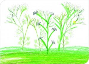 Riesenbärenklau-Zeichnung T.MItsching  Naturparkschule J-B