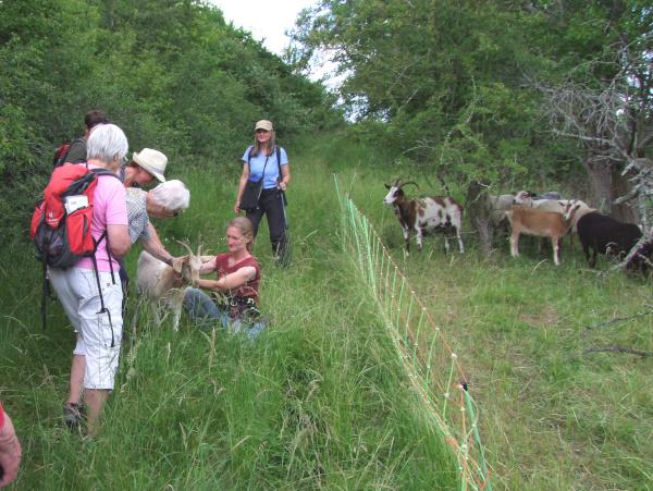 Besuch bei der Schäferin Frau Diermayer c Christian Bringmann Artenvielfalt durch Schaf  und Ziegenbeweidung