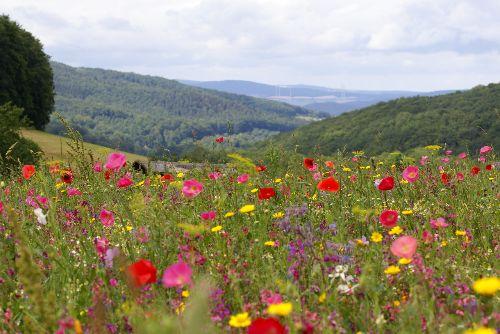 Blumenwiese Weißenbach c Andrea Imhäuser Frau Holles Blumenwiesen blühen