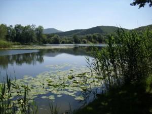Bruchteiche (c) Geo-Naturpark Frau-Holle-Land