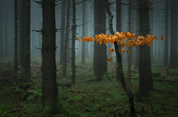 Buche im Nebelwald c Dietmar Voorwold 620x409 Fotowanderung Herbststimmung