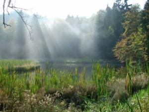 Frau-Holle-Teich im Nebel (c) Marco Lenarduzzi