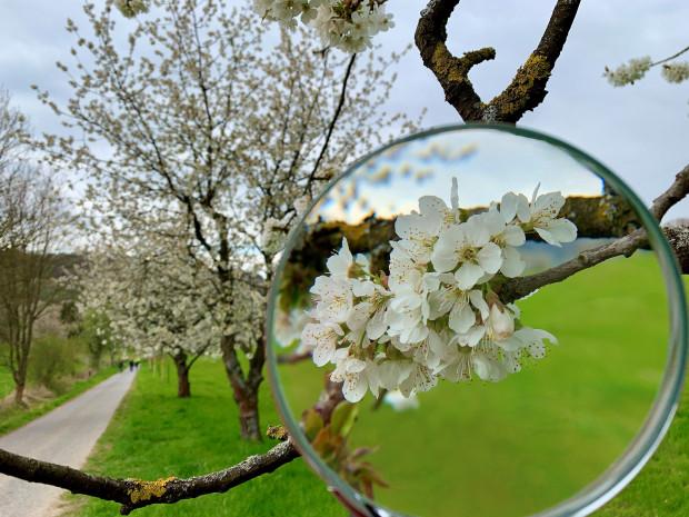 Gewinnerfoto Fotowettbewerb Kirschenland 2021 c Verena Leise min 620x465 Gewinnerin des Fotowettbewerbs Kirschenland 2021