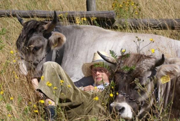 Grauvieh mit Kuhhirte c Andrea Imhäuser 620x415 Tierischer Familientag an den Germeröder Mohnfeldern