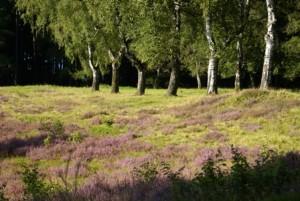 Heide bei Großalmerode (c) Andrea Imhäuser