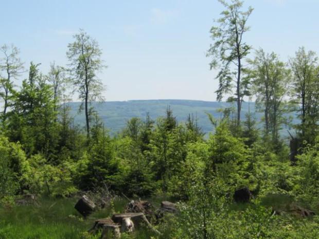 IMG 4454 Meißnerblick 620x465 Vulkanismus im Kaufunger Wald
