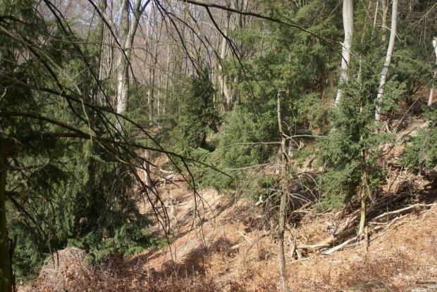 Im Eibenwald c A. Imhäuser 620x415 Eiben im Grenzgebiet