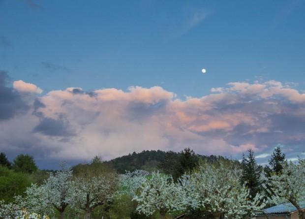 Kirschblüte Morgenlicht Himmel MondcMarkus Balkow 620x445 Vollmondwanderung in die Dämmerung