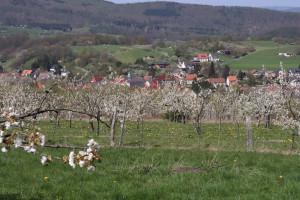 Blick vom P25 zur Kirschblütezeit (c) Hartmut Neugebauer