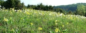 Das Bühlchen im Mai (c) Geo-Naturpark Frau-Holle-Land
