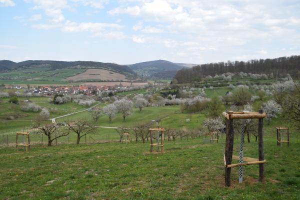 Neue Kirschbäume C Susanne Pfingst Abteilung Landschaftspflege beginnt mit der Arbeit
