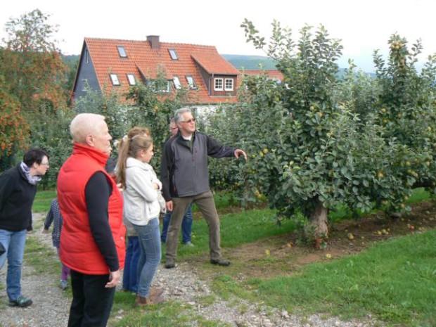 P1120183 620x465 Zur Apfelernte beim Obsthof Bausch